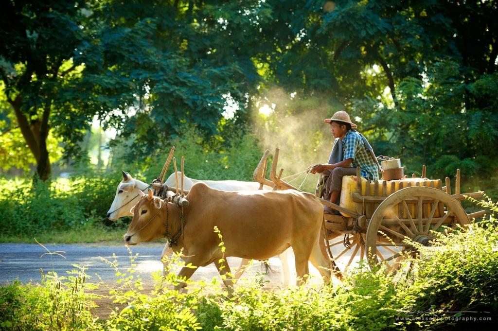 缅甸 2012
