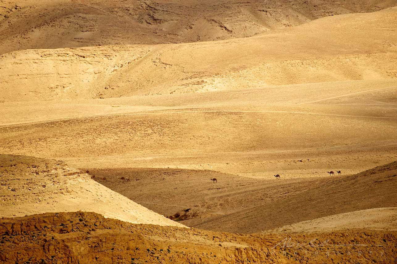Israel March 2011 31